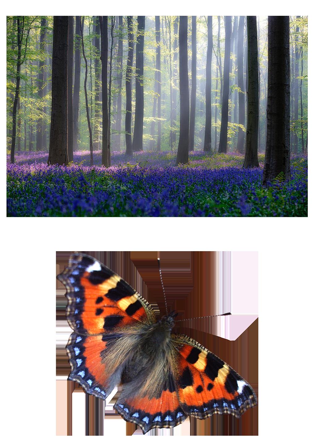 El Bosque cinematográfico: Requiem por una mariposa | Visual404 #1